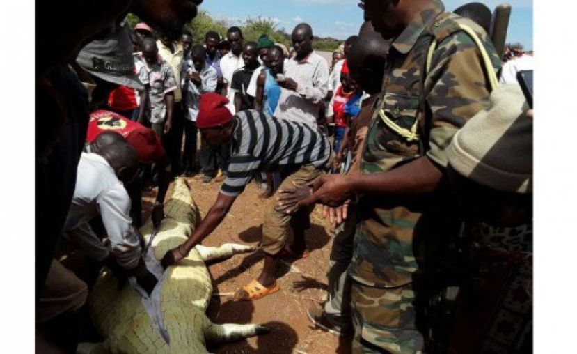 Kenyans Kill Giant Crocodile to Look for Girl's Body